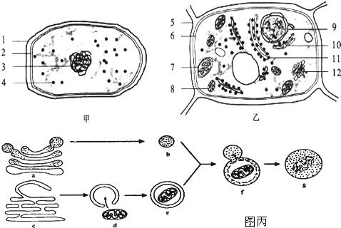 亚显微结构模式图