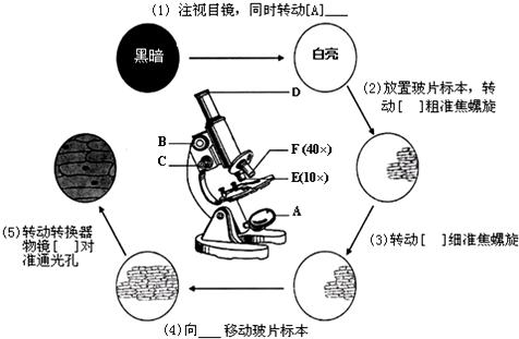 高一生物显微镜结构及使用方法