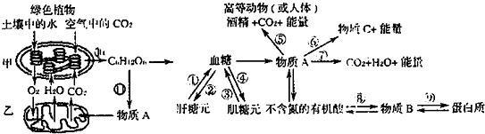 如图为高等绿色植物和高等动物(如人体)新陈代谢的部