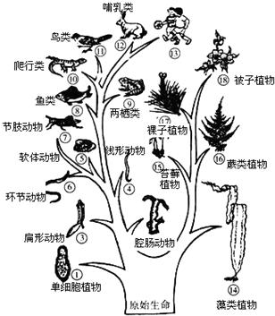 【分析】动物的分类除了比较动物的外部形态结构