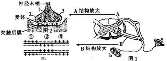 图是一个反射弧,突触和神经纤维的结构示意图,据图示信息回答下列问题