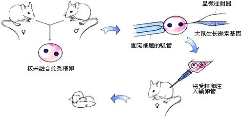 昆虫卵巢结构图