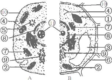 b为动物细胞,植物细胞亚显微结构示意图