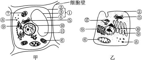 动物细胞的亚显微结构模式图