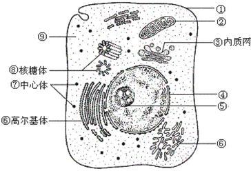 如图是动物细胞的亚显微结构示意图,据图回答问题.