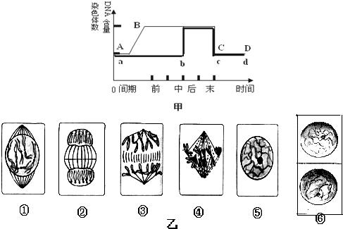 甲图是植物细胞有丝分裂的细胞周期中核内及