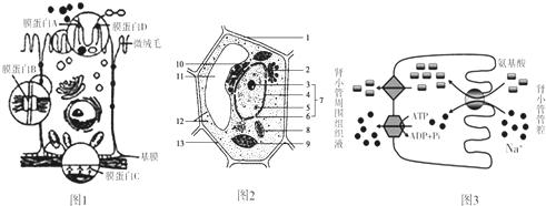 显微结构示意图,图3为氨基酸和na