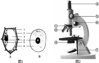 下列是有关显微镜使用的叙述,前一项是操作,后一项是目的,其中不正确