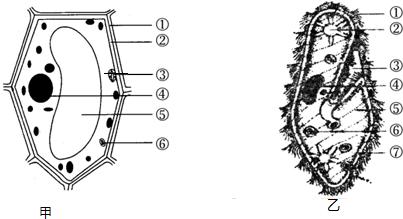 甲为植物细胞模式图