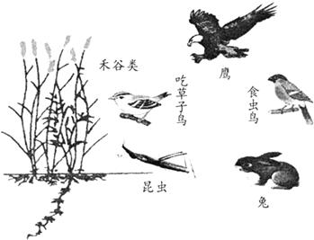 蜻蜓国画画法步骤视频
