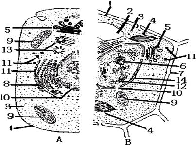 如图表示动物,植物细胞二合一显微结构模式图