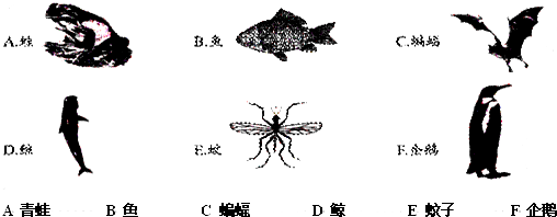 身体分节是环节动物和节肢动物的共同特征