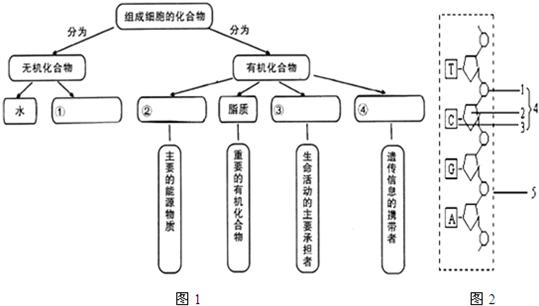 完成下面有关组成细胞主要化合物的概念图1