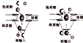 2015年安徽省江淮名校联考高考生物二模试卷