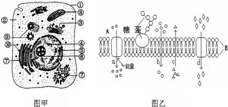 如图为高等动物细胞及细胞膜的亚显微结构模式图