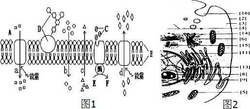 如图1为高等动物细胞及细胞膜的亚显微结构模式图