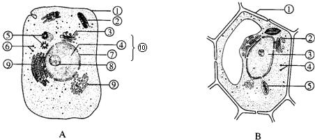 如图是细胞亚显微结构图.请根据图回答下面的问题