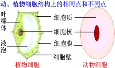 某生物兴趣小组用显微镜观察人体口腔上皮细胞