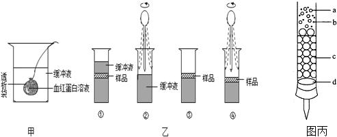 如图表示血红蛋白提取和分离实验的部分装置或操作