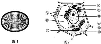 1 图2是两种生物细胞的亚显微结构模式图.据图回答