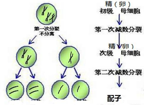 解:图解只表示21号染色体状况:(如图)
