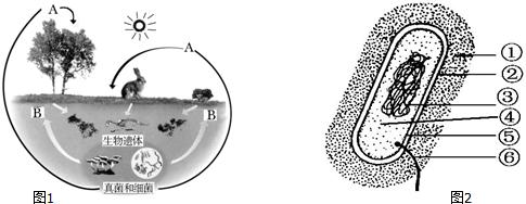 细菌细胞的结构示