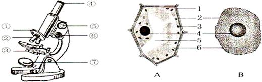 如图所示分别为显微镜和动