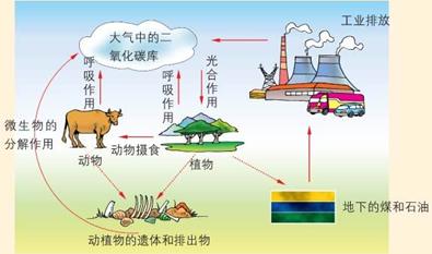 如图是生态系统的碳循环示意图