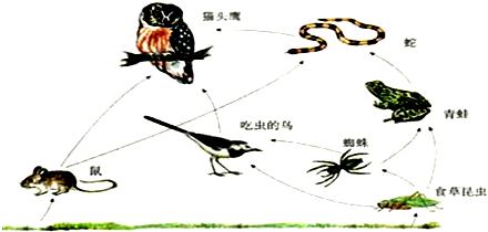统的食物网简图