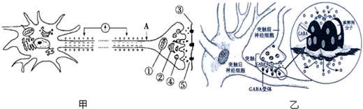 高等动物神经系统中的信息传递