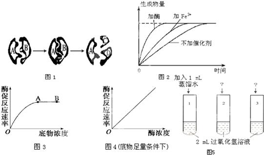 新配制的体积分数为3%的过氧化氢溶液