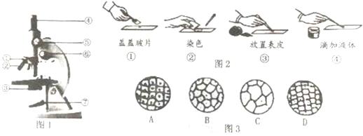 图2中制作洋葱鳞片叶内表皮细胞临时装片的步骤