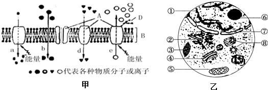(5)乙图是低等植物细胞亚显微结构示意图