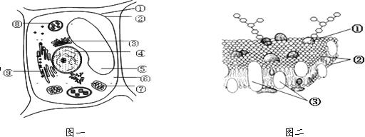 > 试题解析   高等植物 高等植物细胞的 亚显微 亚显微结构图,判断的
