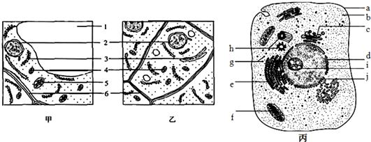 亚显微结构示意图