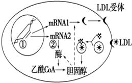 醇的含量受LDL(一种胆固醇高中为45%的脂蛋有那些含量常宁市图片