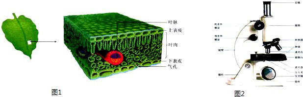 """为什么制作动物细胞装片时用生理盐水,而制作植物细胞时用清水?(图21) 为了解决用户可能碰到关于""""为什么制作动物细胞装片时用生理盐水,而制作植物细胞时用清水?""""相关的问题,突袭网经过收集整理为用户提供相关的解决办法,请注意,解决办法仅供参考,不代表本网同意其意见,如有任何问题请与本网联系。""""为什么制作动物细胞装片时用生理盐水,而制作植物细胞时用清水?""""相关的详细问题如下:为什么制作动物细胞装片时用生理盐水,而制作植物细胞时用清水? ===========突袭网收集的解决方案如下========="""