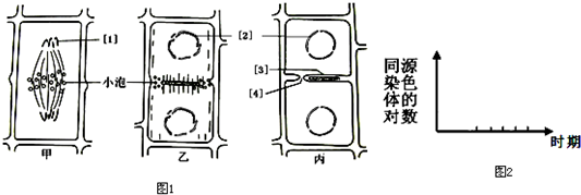 图1为某高等植物细胞有丝分裂中细胞质的分裂过程