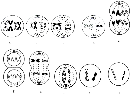 下面是某高等动物细胞分裂示意图