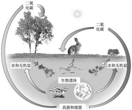 生态系统物质循环都不可能维持