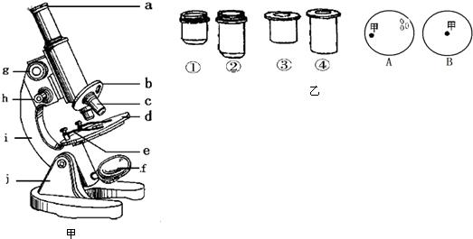 如图甲为显微镜结构图,请根据图回答下列问题.