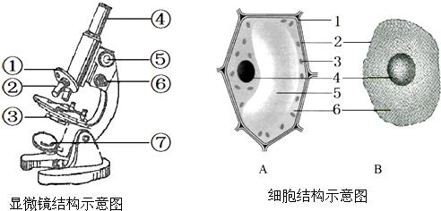 白细胞 显微镜  下图甲是某高等动物细胞亚显微