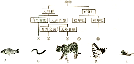 根据以下动物分类表解