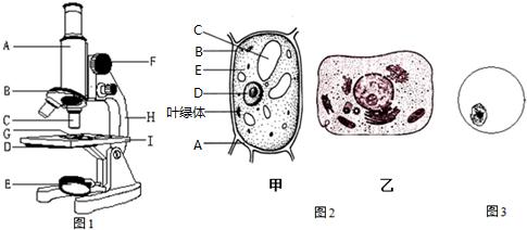 ④ (5)小明用显微镜观察了甲乙两种细胞结构,则: ①动物细胞是(图2)