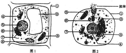 2分别为高等植物细胞和动物细胞的亚显微结构模式图