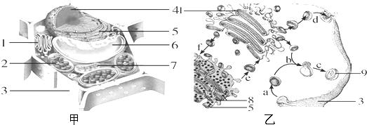 图甲为植物细胞亚显微结构模式图
