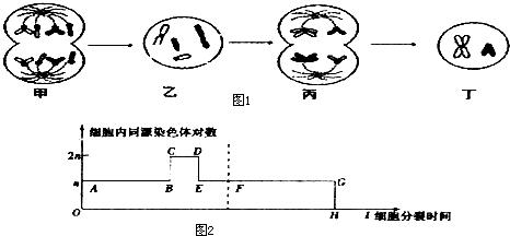 如图为某高等动物细胞分裂图象及细胞内同源染色体的