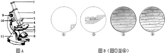 图a为光学显微镜结构示意图