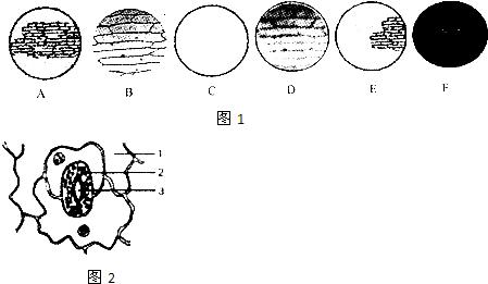 显微镜观察洋葱鳞片叶内表皮细胞,以下几幅图是他在观察过程中看到的