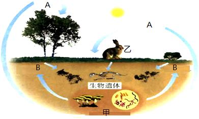 (2)从生态系统组成上看